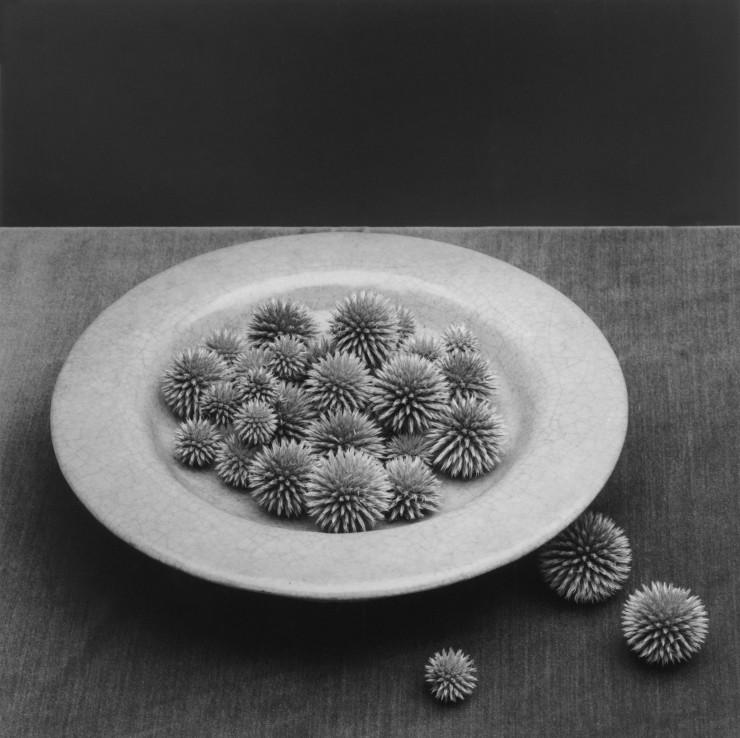 robert-mapplethorpe-pods-1985